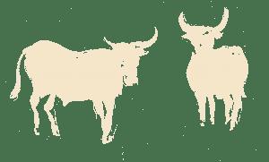Noble Oxen